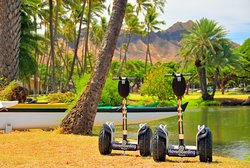 Don't miss the beautiful palm tree laced Ala Wai canal. See outrigger canoe teams and the Ko'ola