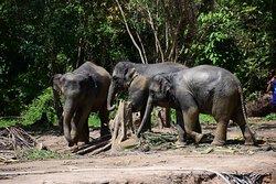 Elephant Care Samui