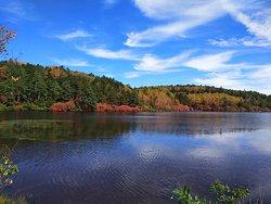 Pond Shirakoma