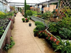 Wyatts Plant Centre