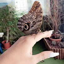 Live Butterfly Museum