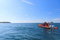 St Andrews & Elie Sea Safari