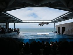 Joetsu Aquarium Umigatari