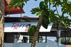 Terra Restaurant & Grill