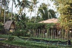 The Kul Kul Farm