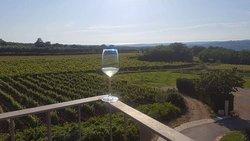 Arman Marijan Winery