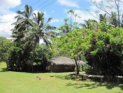 Arai-Te-Tonga