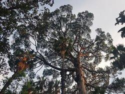 Огромные деревья парка