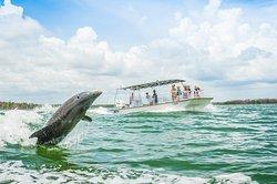 Florida Adventures and Rentals
