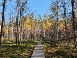 Rannametsa Tolkuse Nature Trail