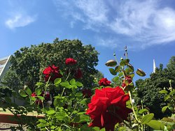 Roses in the castle district, new perspective