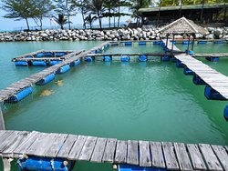 Tukik Babel Sea Turtle Hatchery