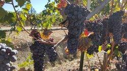 Rosella's Vineyard and Winery