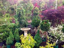 Bayberry Gardens
