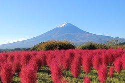 Kawaguchiko Natural Loving Centre