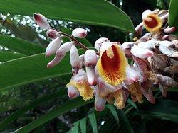 Muchas y hermosas flores