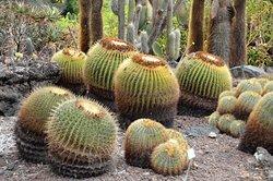 Botanical Park of Maspalomas (El Parque Botanico de Maspalomas)