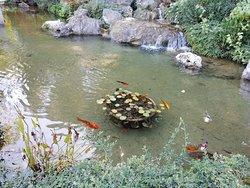 Пруд в японской части с красными рыбками