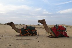 Jasmin Desert Safari & Camp - Day Tours