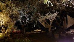 """Une """"terrasse"""" sous les oliviers"""