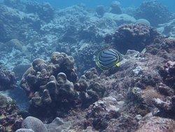 poissons belle mare