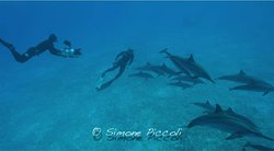 Private Dive Guide - Any Dive Travel Requirement Catered For, World-Wide.