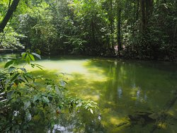 Pristine Rainforest and clear river near Clearwater cave