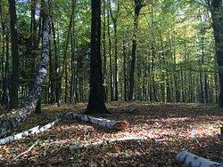 Pobliskie lasy - tuż za furtką.
