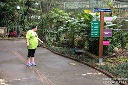 tentando convencer o pavão a ir perto rsrs