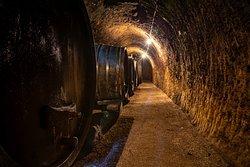 Alter Weinkeller mit Holzfässern, in den Löss gegraben