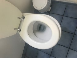 Toilet seat loose (Needs maintenance to tighten it)