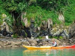 Akaroa Guided Kayak Safari