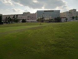 Played golf yesterday