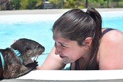 otter swim