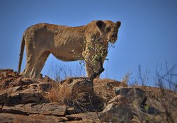 Africa's Amazing Wildlife Through The Lens of The African Safari Guru Travel Company!
