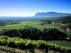 Our Area - Constantia Valley, View towards Muizenberg