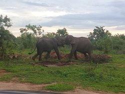 Elephant Safari at Udawalawa