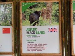 Info on the bears