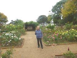 Inside the rose garden
