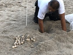 The AMAZING Miguel relocates sea turtle eggs to give them a better chance of survival