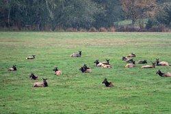 Jewell Meadows Wildlife Area