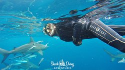Shark Diving Adventures