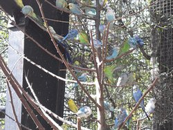 Tree of Colorful Birds