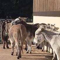 The Donkey Sanctuary Ivybridge