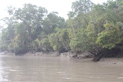 Sundarban, is a mangrove jungle in Bangladesh.... it's a natural place....