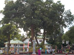 The tree at the entrance
