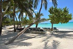 Isla Saona Tours, the best option to visit Isla Saona.