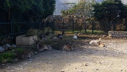 Visita al Bioparco di Carini