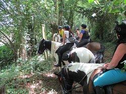Forêts et collines...tous à cheval en sécurité