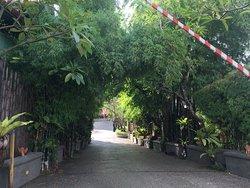 green bamboo entrance gate